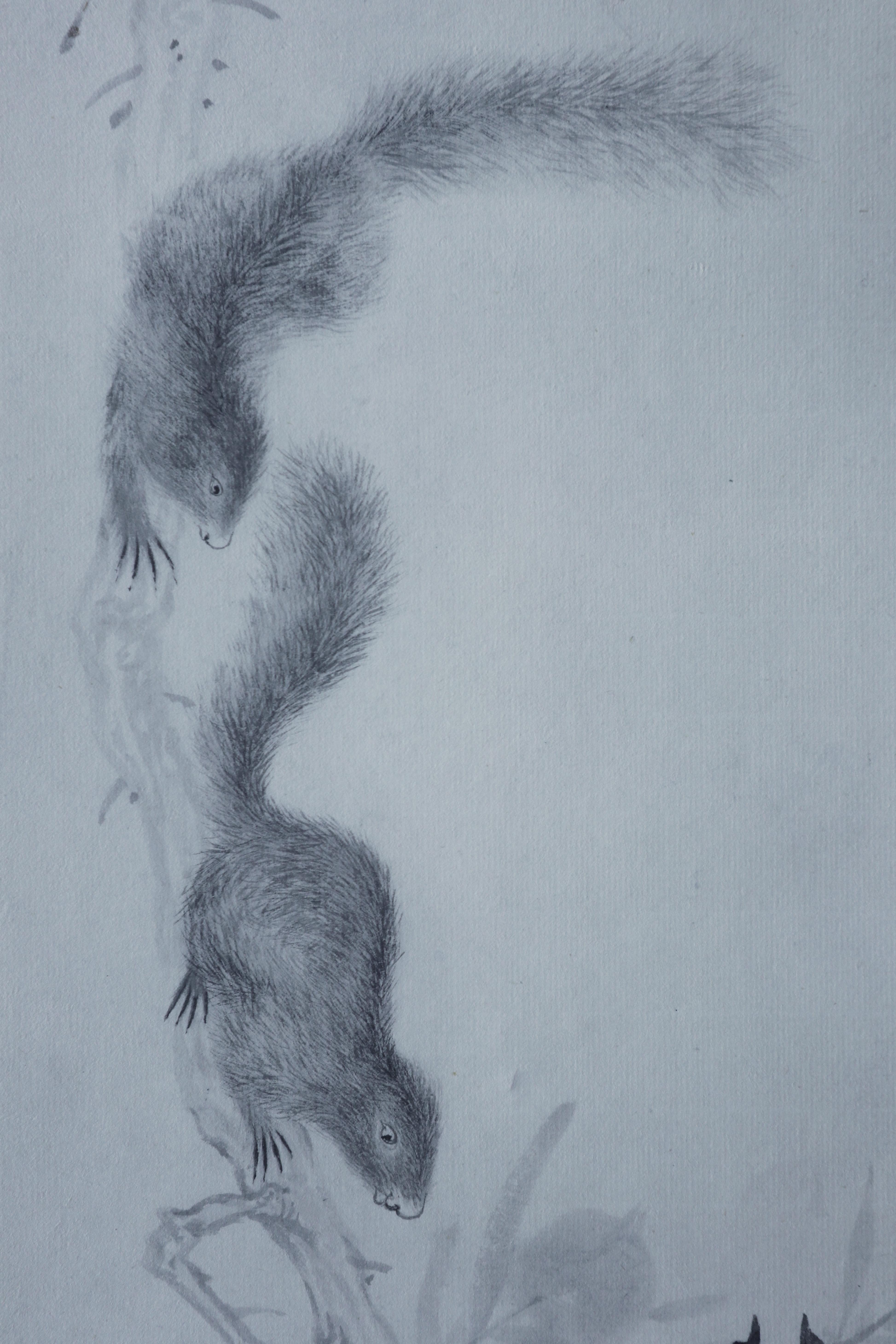 素描画松鼠步骤